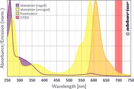 CAGE 590|吸収&蛍光スペクトル
