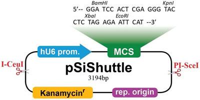 pSiShuttle Vector (品番:A012)