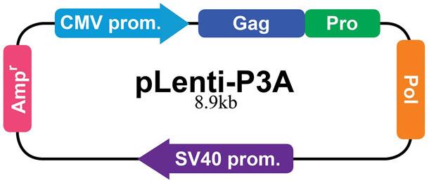 pLenti-P3A
