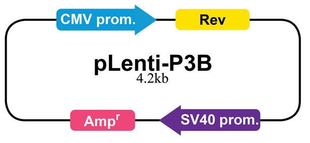 pLenti-P3B