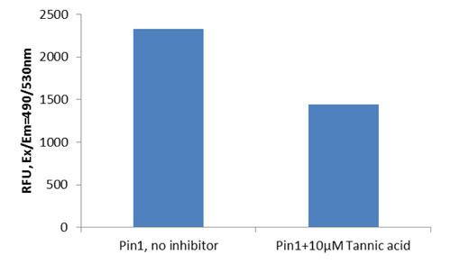 図2 タンニン酸による Pin1 活性の阻害