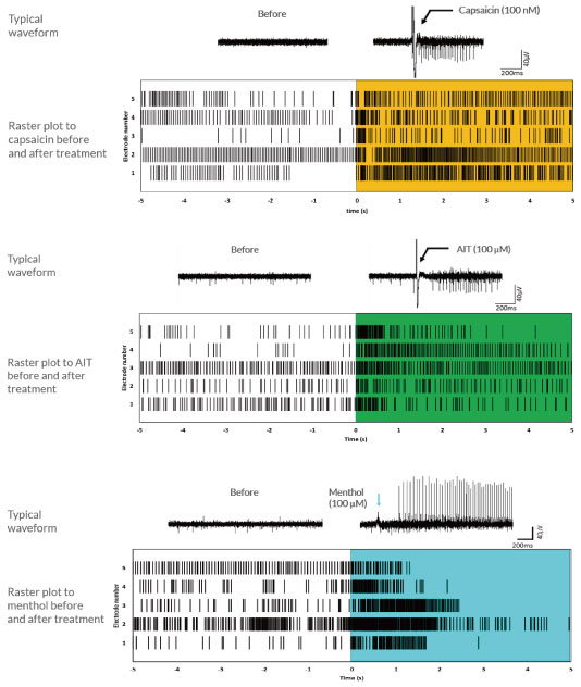 各種痛み関連分子に対する刺激応答をMEA上で検出