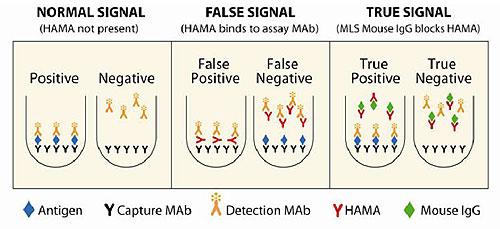 一般的なマウスIgGのHAMA阻害機構