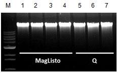 本キットおよび他社キット(シングルカラムタイプ)で精製した、ヒト全血(200 μL)由来ゲノムDNAの比較