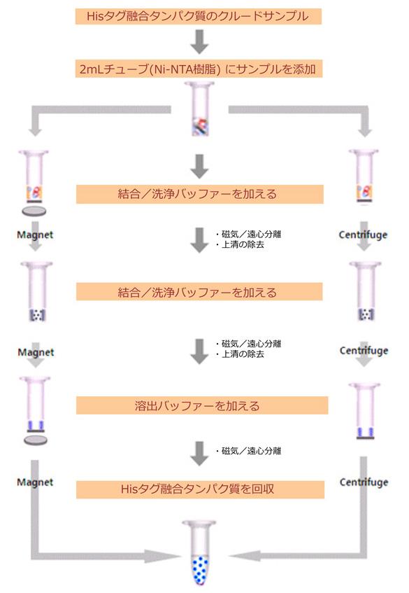 Hisタグタンパク質の精製プロトコール