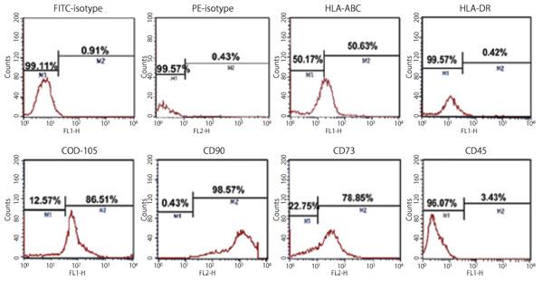 MSC NutriStem® XF 培地にて5 継代まで培養した Wharton?s jelly 由来ヒトMSC 上の表面マーカーの発現を フローサイトメトリーにて解析した。