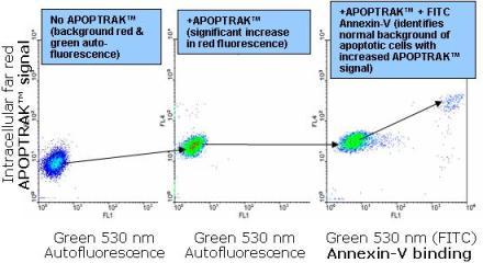 アポトーシス細胞を少量含むB細胞リンパ腫へのAPOPTRAK取り込み