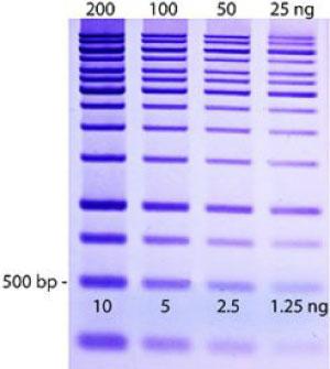 DNAzure で染色した1 kb DNAラダーのバンド画像