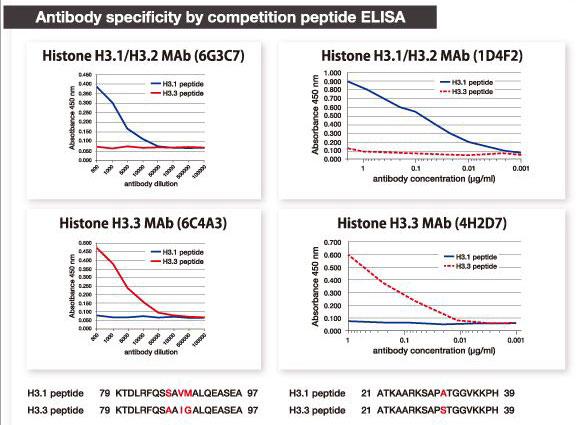 ヒストンH3バリアントモノクローナル抗体の特異性をELISA法で確認