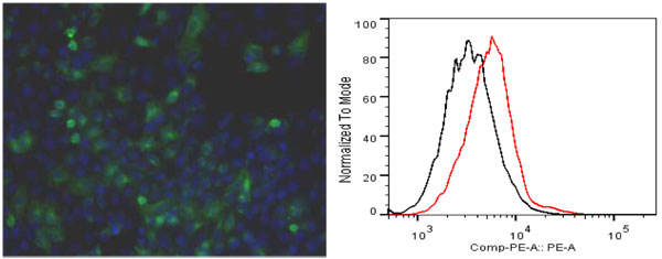ITIH4抗体(品番:ICA-TG2-RTP1)を用いた細胞染色及びFACS適用例