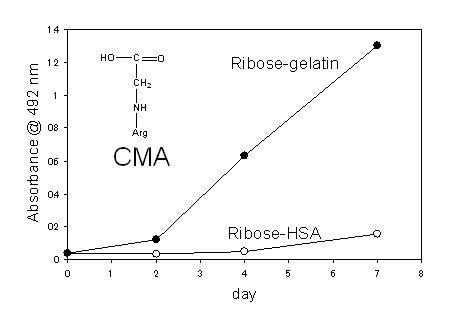 抗CMA抗体 (3F5)