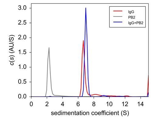 PB2, IgG(8-1.1), PB2+IgG(8-1.1)の超遠心分析結果