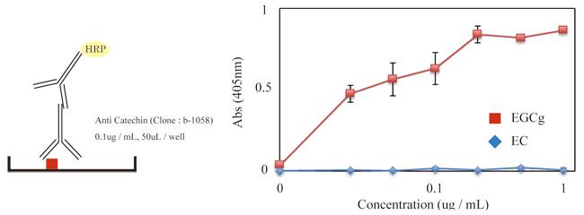 Direct ELISA法にてエピガロカテキンガレート(EGCg)とエピカテキン(EC)の濃度を測定