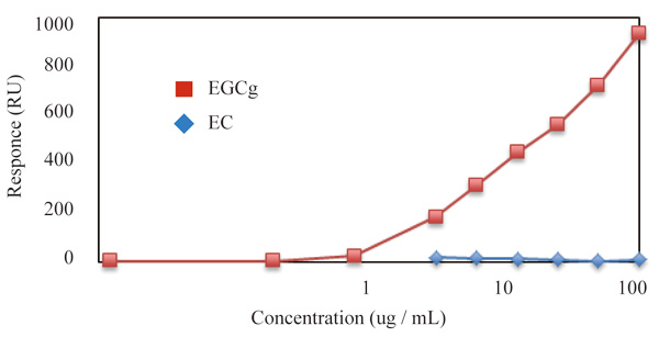 SPR測定にて抗カテキン抗体(クローン:b-1058)とan epicatechin gallate(EGCg)とepicatechin(EC)の親和性を測定