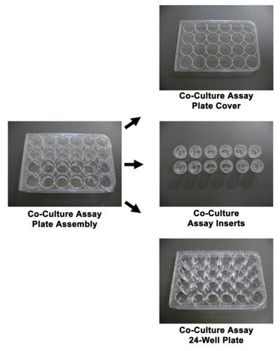 細胞共培養プレート