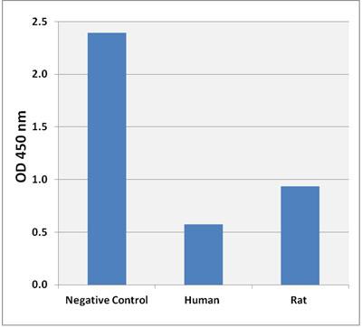ヒトまたはラット血清(希釈なし)中のコール酸レベルをネガティブコントロール(アッセイ希釈液)と比較した。