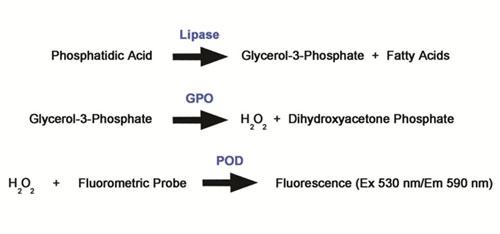 ホスファチジン酸アッセイの原理