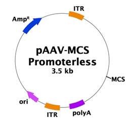 pAAV-MCS Promoterless Expression Vector