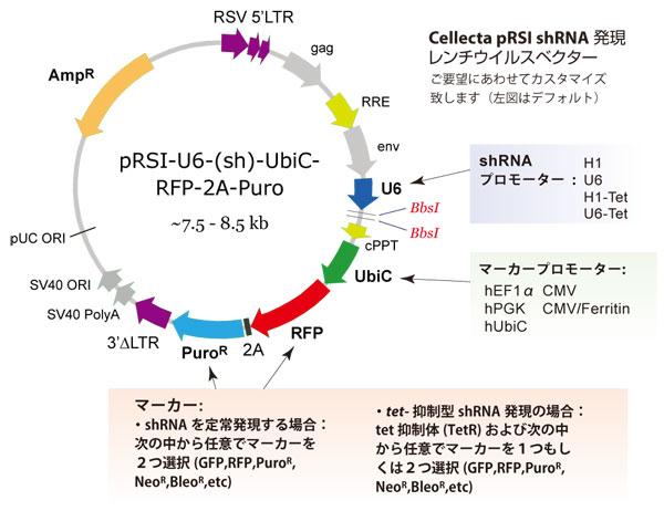 レンチウイルスshRNAライブラリー構築用ベクター カスタマイズオプション略図