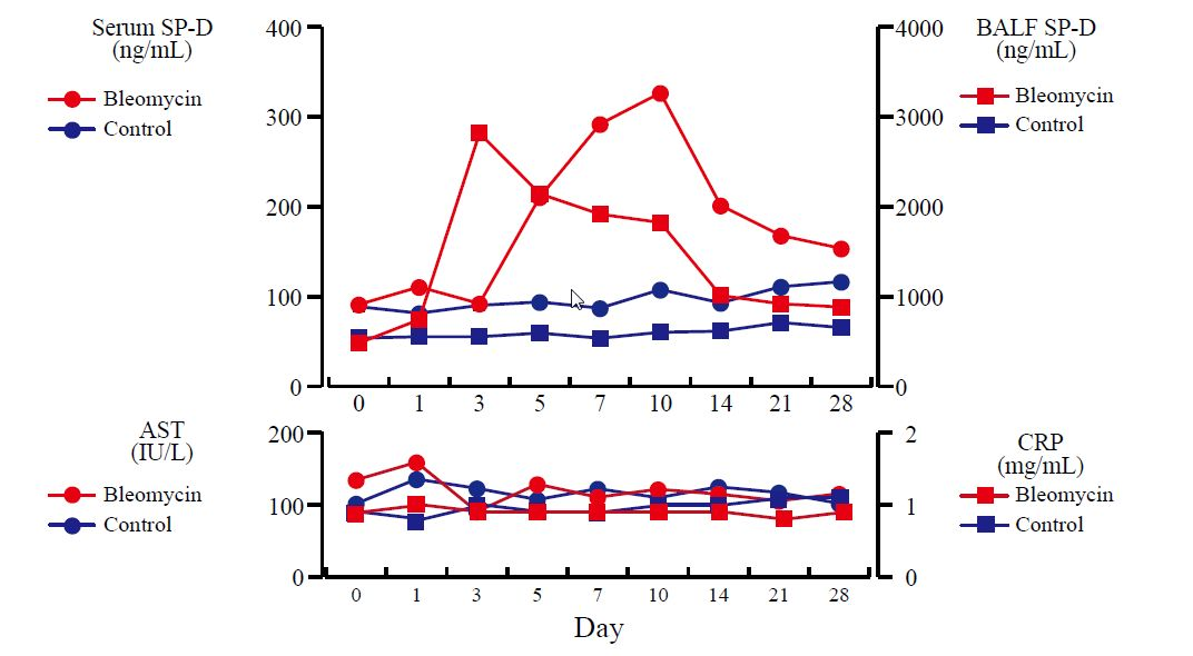 Serum SP-D and BALF Concentrations of Bleomycin-treated Wistar Rats