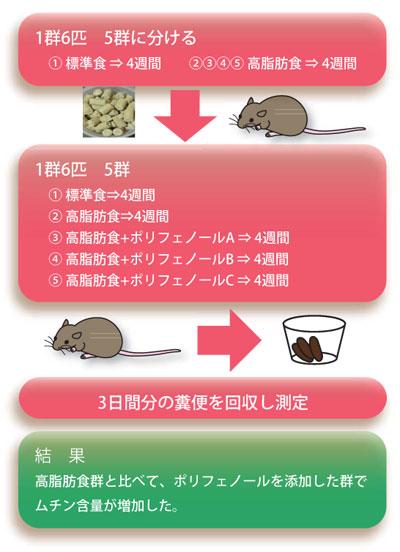 実験例:ポリフェノール投与が高脂肪食摂取ラットの腸内環境におよぼす影響