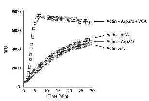 アクチン結合タンパク質を特長づけ