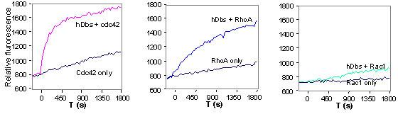 図1 Dbs の Cdc42、RhoA、Rac1 の対する交換活性を、96ウェルハーフエリアプレートを用いて測定