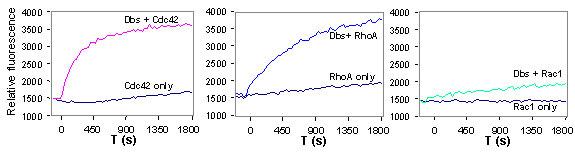 図2 Dbs の Cdc42、RhoA、Rac1 の対する交換活性を、384ウェルプレートを用いて測定