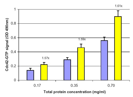EGFによるCdc42の活性化