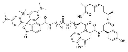 SiR-actin(アクチン染色プローブ:CY-SC001)