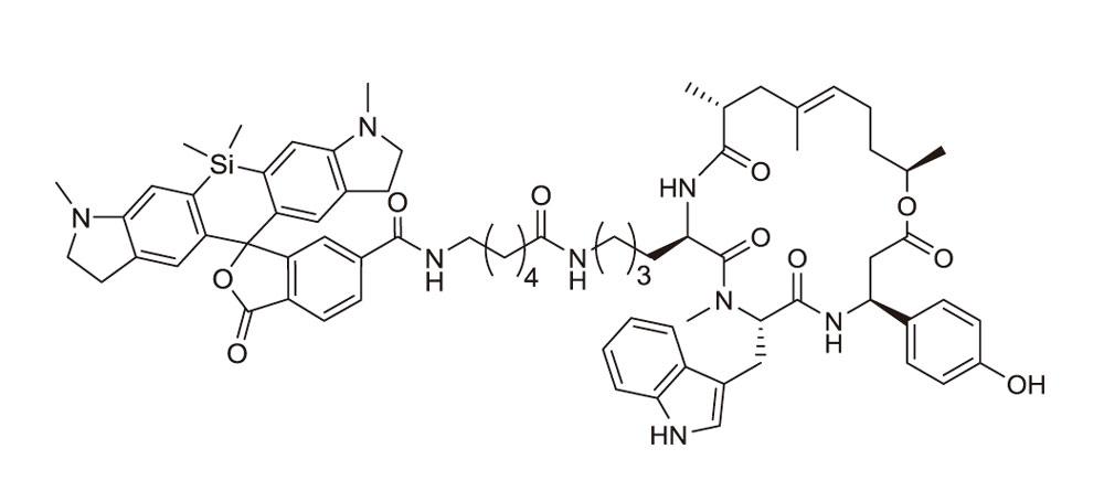 SiR700-actin(アクチン染色プローブ:CY-SC013)