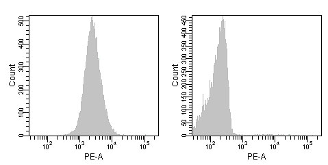 R-Phycoerythrin標識抗体を用いたHL60細胞の蛍光染色