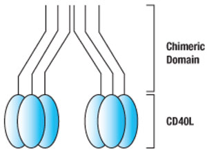 MegaCD40L(TM)の図形表示