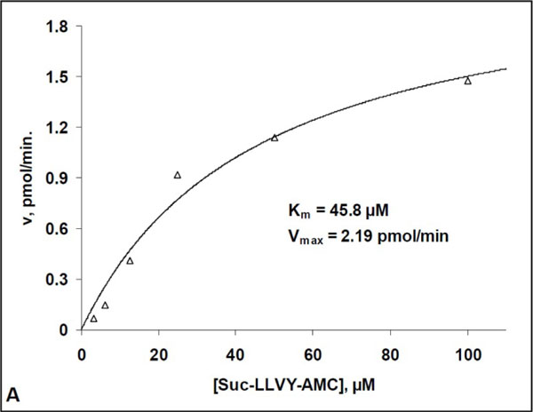 20Sプロテアソームによる Suc-LLVY-AMC 開裂のキネティクス