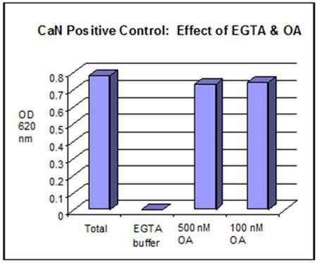 図2. ポジティブコントロールとしてのカルシニューリンのEGTA及びオカダ酸による影響