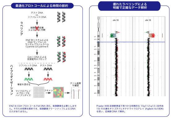 オリゴアレイ/BACアレイ用CGHラベリング試薬のプロトコール、製品データ