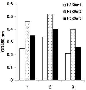 アセチル化ヒストンH3を定量