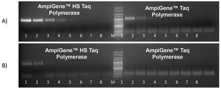 ヒトゲノムDNA 100 ng/mlを1/3倍した希釈系列。A)β2MG(Beta-2 microglubulin) 遺伝子
