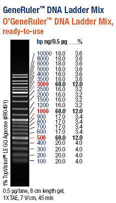 Generuler Tm Dna Ladder Mix Ready To Use(fer Sm0333 5