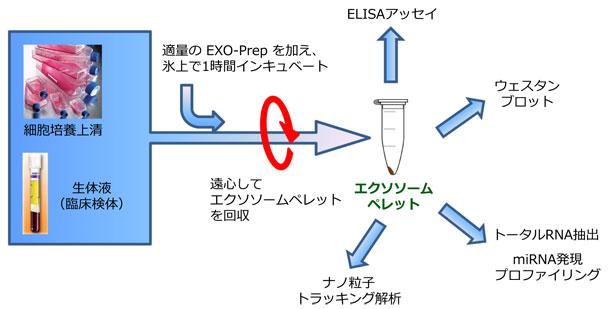 エクソソーム(エキソソーム)単離キットのプロトコール