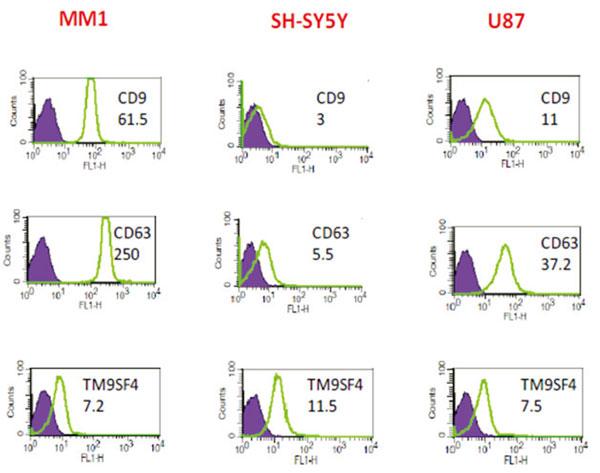 MM1細胞、SH-SY5Y細胞、U87細胞から精製したエクソソームに含まれるエクソソームマーカー(CD9、CD63、TM9SF4)のFACS解析