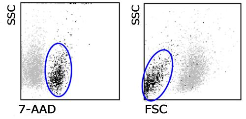 7-AAD 核染色液 | フローサイトメトリーによる死細胞除去/PEやFITCと ...