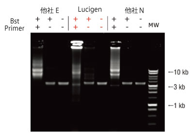 Lucigen社のBst DNAポリメラーゼ(Exo-)の非常に高い鎖置換ポリメラーゼ活性