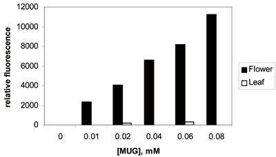 シロイヌナズナの葉と花抽出物内のGUS活性