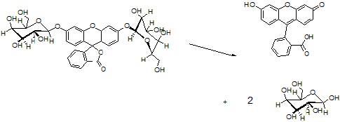 di-ß-D-galactopyranoside (FDG) 基質