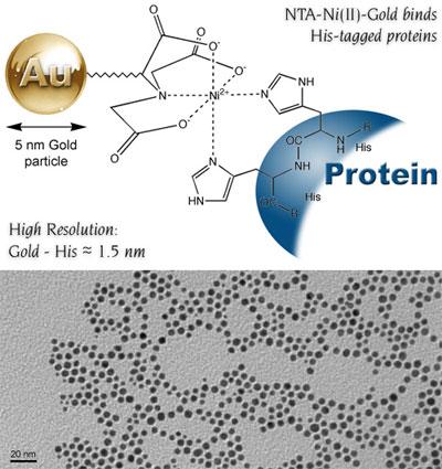 Ni-NTA-Nanogold®