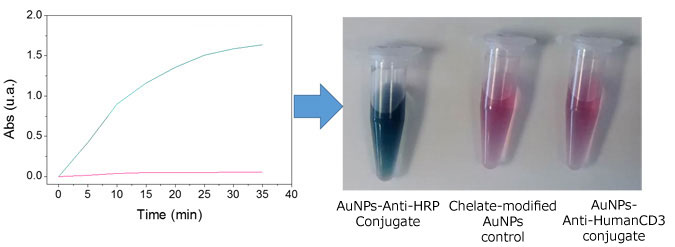 AuNPs-抗体コンジュゲートに結合したHRP活性の測定