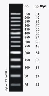 DNAマーカー | ローディングダイ...
