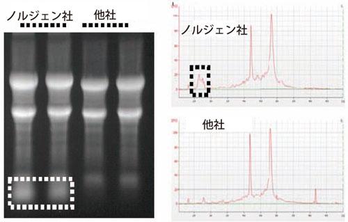 他社キットでは単離できないmiRNA も効率よく回収(サンプル:ハムスター肝臓組織)