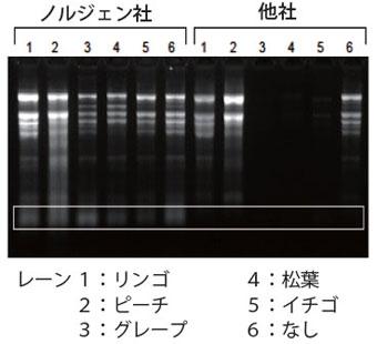 様々な植物サンプルからトータルRNAを抽出